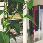 6 House Plants That Clean Your Home Air Post-Diwali