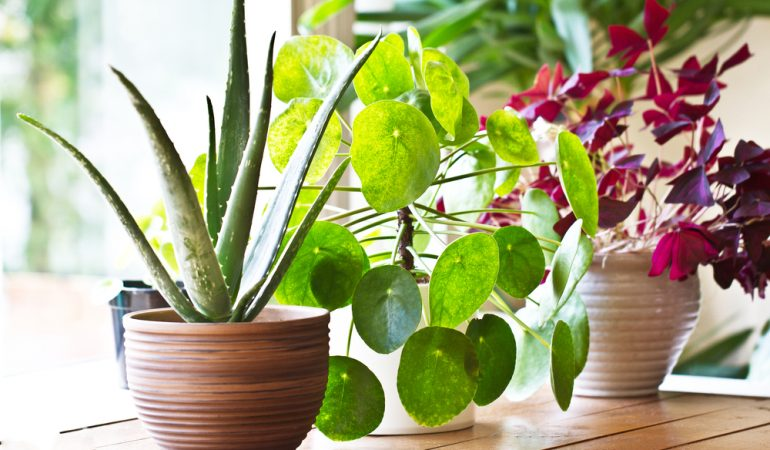 6 House Plants That Clean The Air in Your Home After The Festivities