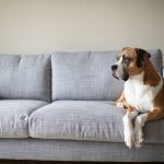 Sofa Material: A Buyer's Guide